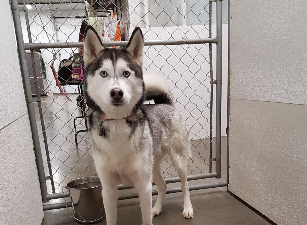Edmonton dog kennel visitor
