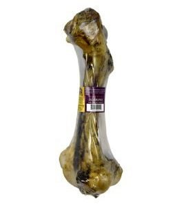 Buffalo Bone Femur