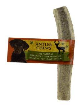 Elk Antler 6 Inch